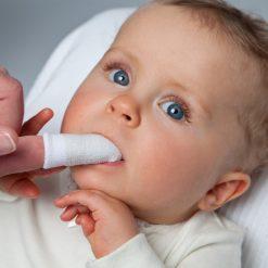 Fingerling Silber-Fee Grünspecht Zahnpflege